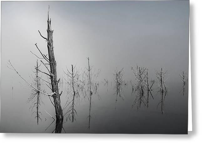 D1087 - Theewaterskloof Trees Greeting Card