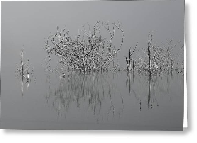 D1093 - Theewaterskloof Trees Greeting Card