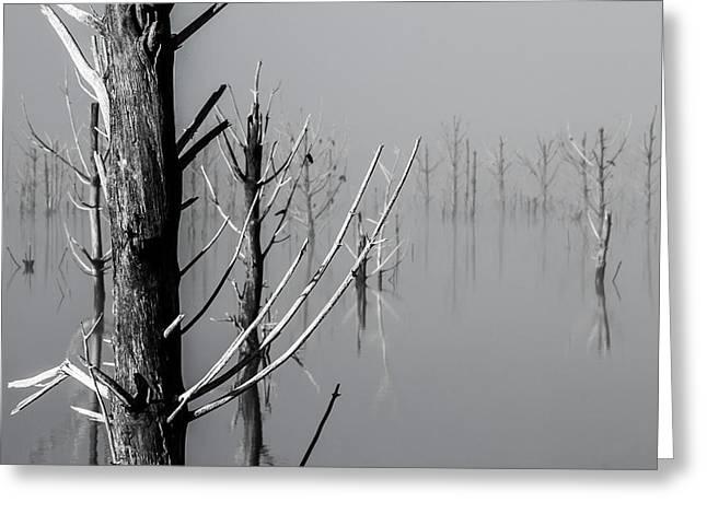 D1095 - Theewaterskloof Trees Greeting Card
