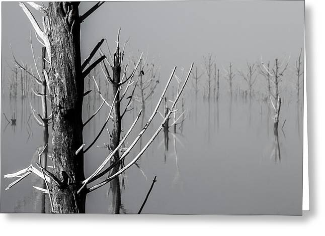 D1095 - Theewaterskloof Trees Greeting Card