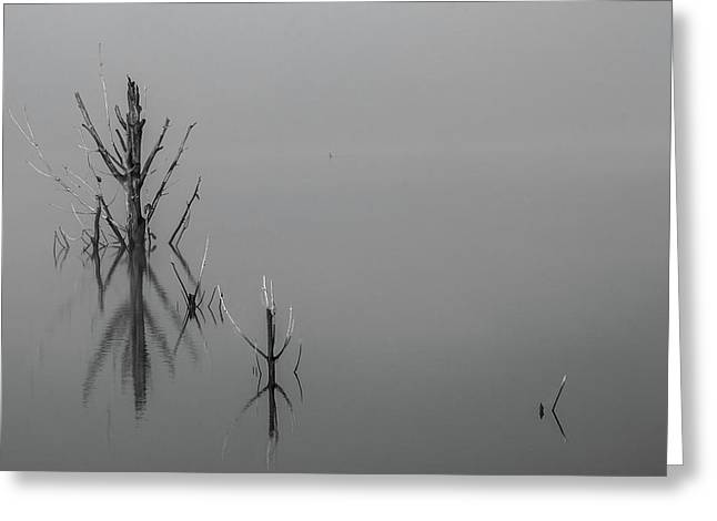 D1096 - Theewaterskloof Trees Greeting Card