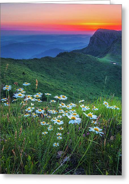 Daisies In The Mountain Greeting Card