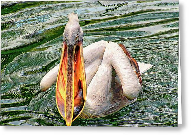 Greeting Card featuring the photograph Dalmatian Pelican by Anthony Dezenzio