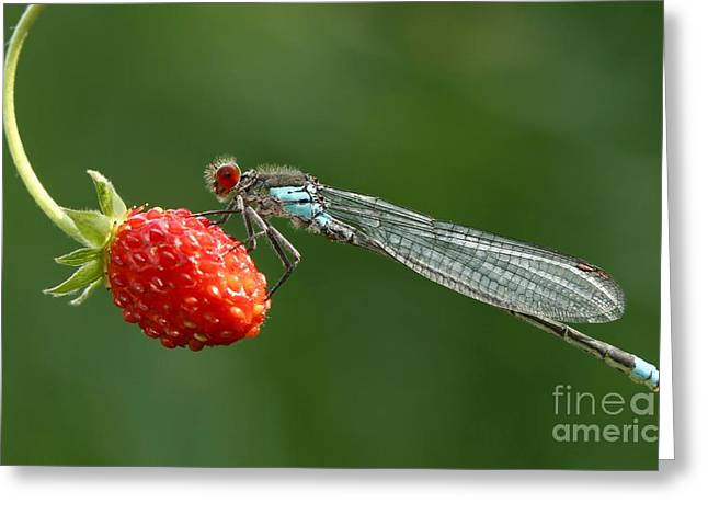 Damselfly On Strawberry Greeting Card