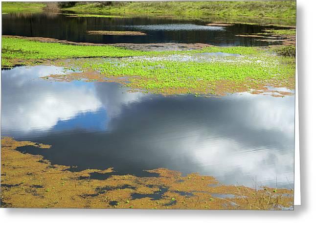 Damselfly Pond - 19 4497 Greeting Card