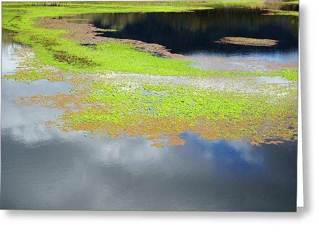 Damselfly Pond - 19 4503 Greeting Card