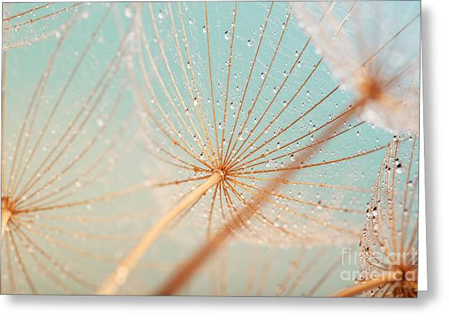 Dandelion Flower With Water Drops Greeting Card
