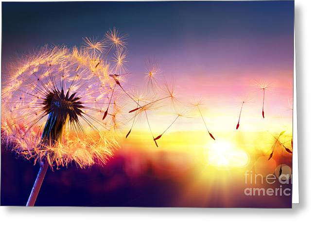 Dandelion To Sunset - Freedom To Wish Greeting Card