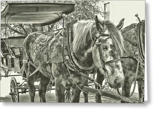 Greeting Card featuring the photograph Dapple Grey by JAMART Photography