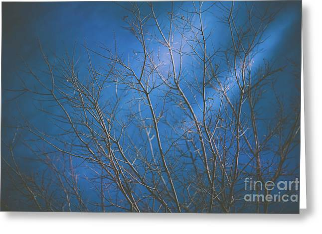 Dark Winter Greeting Card