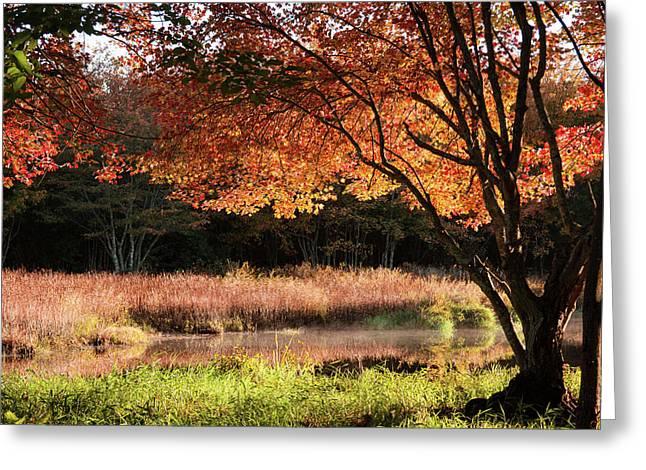 Dawn Lighting Rhode Island Fall Colors Greeting Card