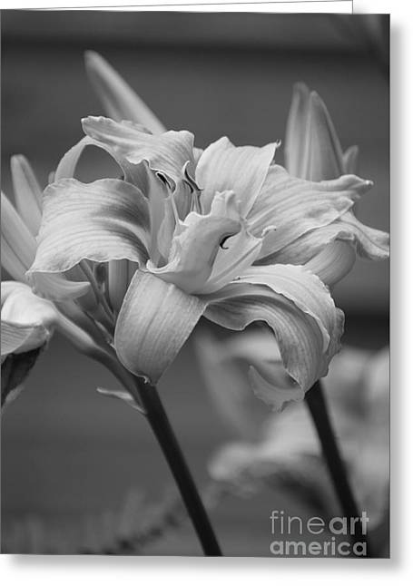 Greeting Card featuring the photograph Day Lily Yellow Filter by Jeni Gray