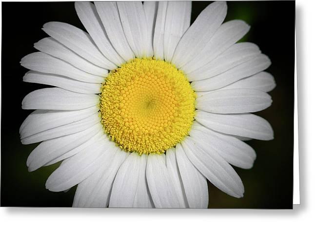 Day's Eye Daisy Greeting Card
