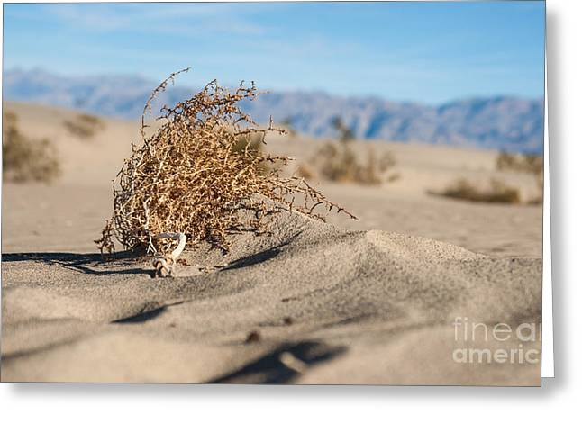 Dead Sagebrush Lies On Sand In Desert Greeting Card