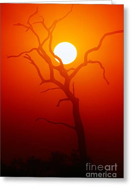 Dead Tree Silhouette With Dusty Sunset Greeting Card by Johan Swanepoel