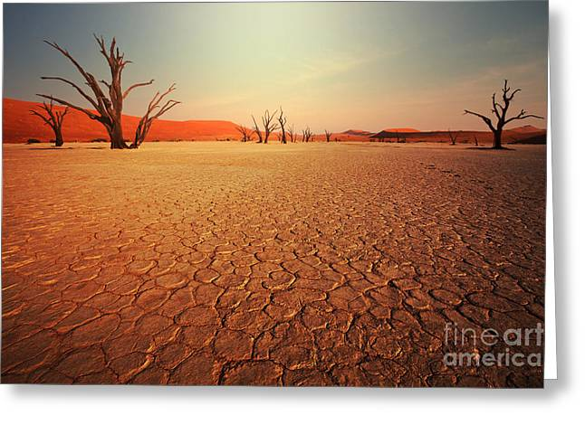 Dead Valley In Namibia Greeting Card