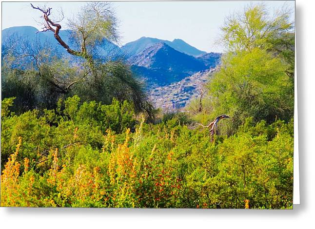 Deep Desert Valley In A Sonoran Desert Spring Greeting Card