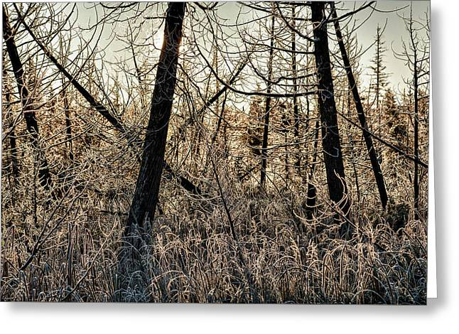 Greeting Card featuring the photograph Deep Frost by Doug Gibbons