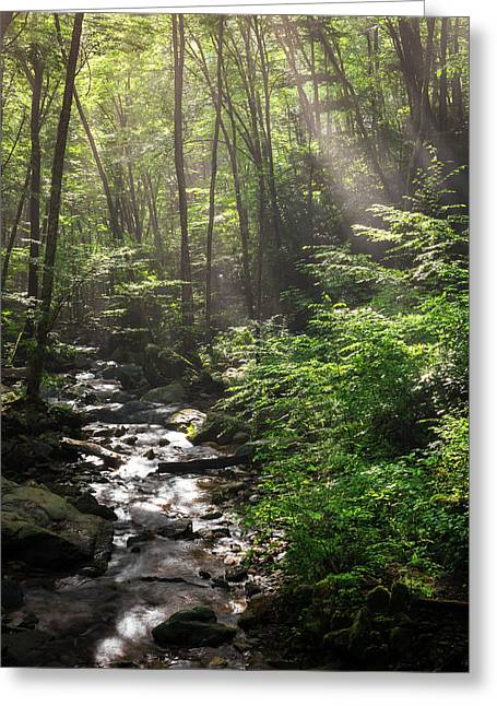 Deep In The Forrest - Sun Rays Greeting Card