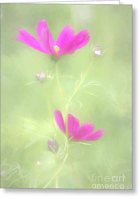 Delicate Painted Cosmos Greeting Card