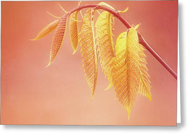 Delightful Baby Chestnut Leaves Greeting Card
