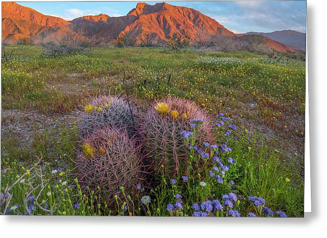 Desert Bluebell In Spring With Barrel Greeting Card