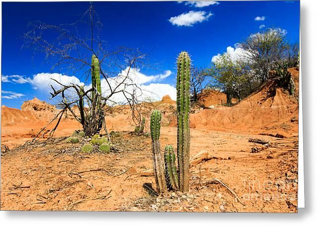 Desert, Cactus In Desert, Tatacoa Greeting Card