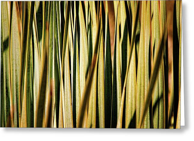 Greeting Card featuring the photograph Desert Grasses I by Leda Robertson