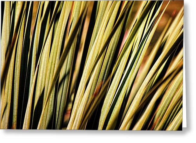 Greeting Card featuring the photograph Desert Grasses II by Leda Robertson