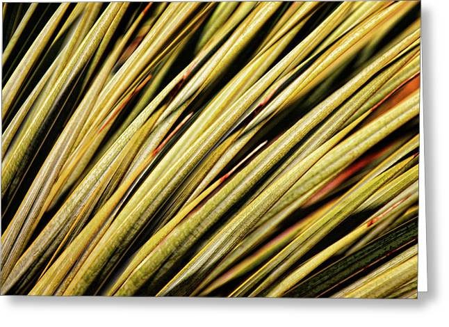Greeting Card featuring the photograph Desert Grasses IIi by Leda Robertson