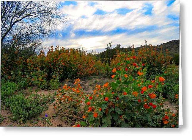 Desert Wildflowers In The Valley Greeting Card