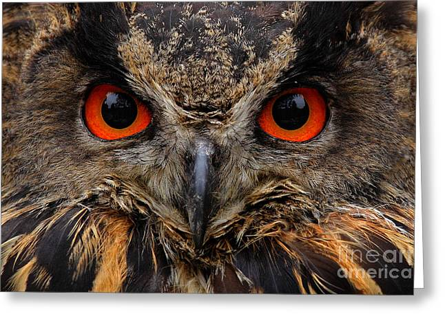 Detail Face Portrait Of Bird, Big Greeting Card
