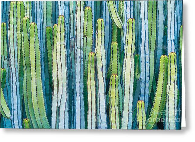 Detail View Of The Cardon Cactus In Greeting Card