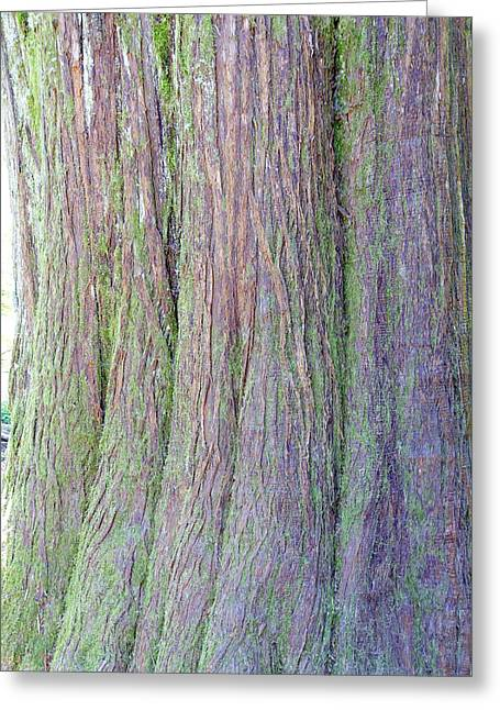Details, Old Growth Western Redcedar Greeting Card