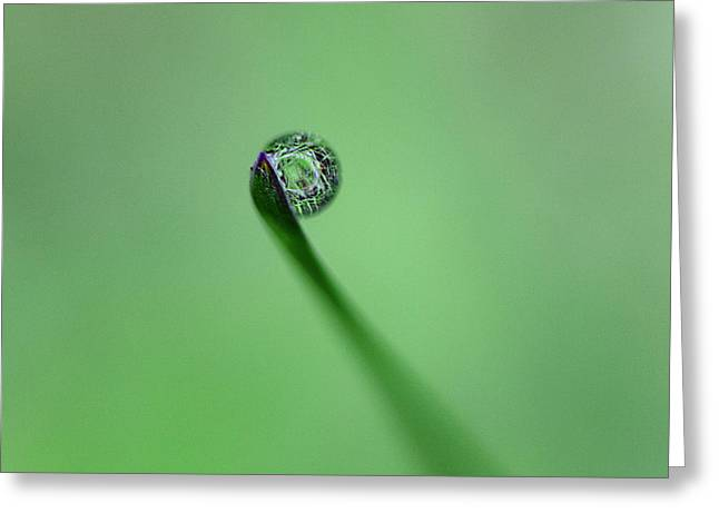 Greeting Card featuring the photograph Dew Drop On Grass by John Rodrigues