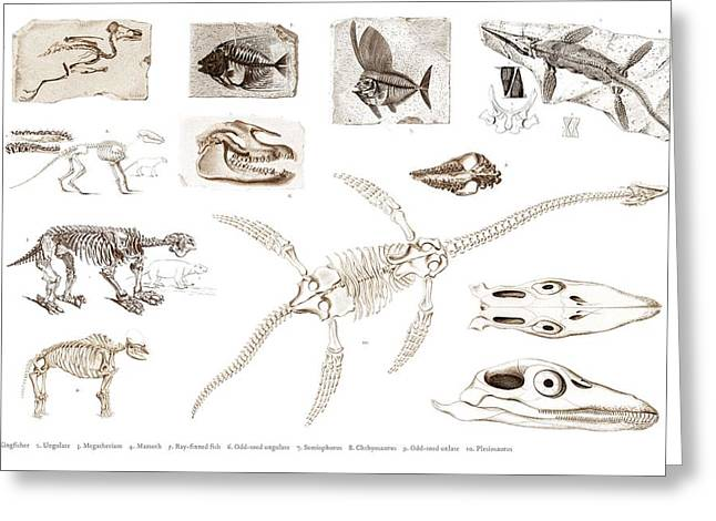 Different Types Of Ancient Fossils Illustrated By Charles Dessalines D' Orbigny  1806-1876 2 Greeting Card