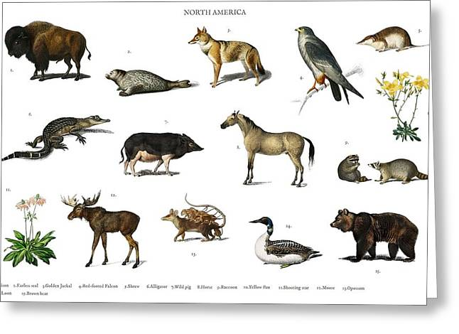Different Types Of Animals Illustrated By Charles Dessalines D' Orbigny  1806-1876 3 Greeting Card