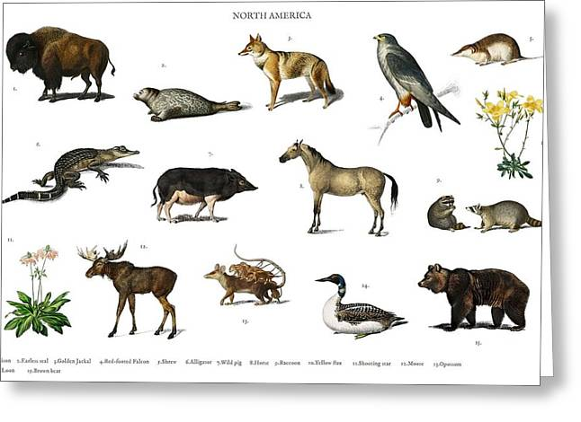 Different Types Of Animals Illustrated By Charles Dessalines D' Orbigny  1806-1876  Greeting Card