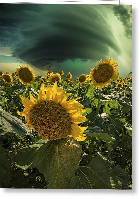 Greeting Card featuring the photograph Disarray  by Aaron J Groen