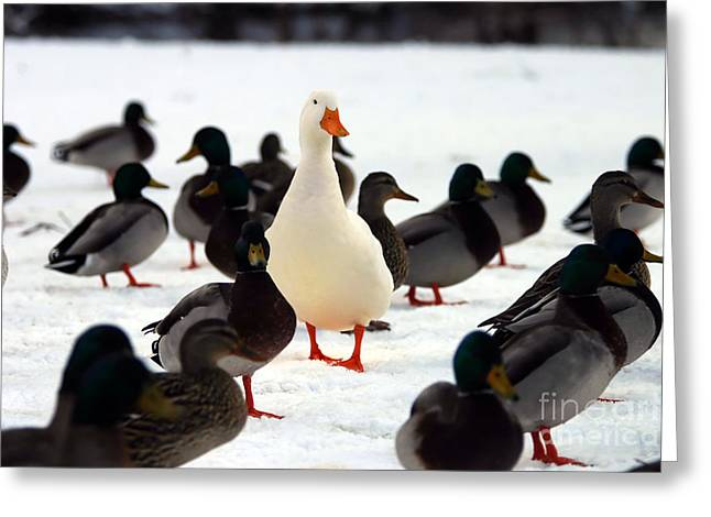 Do You Stand Out From The Crowd  A Greeting Card