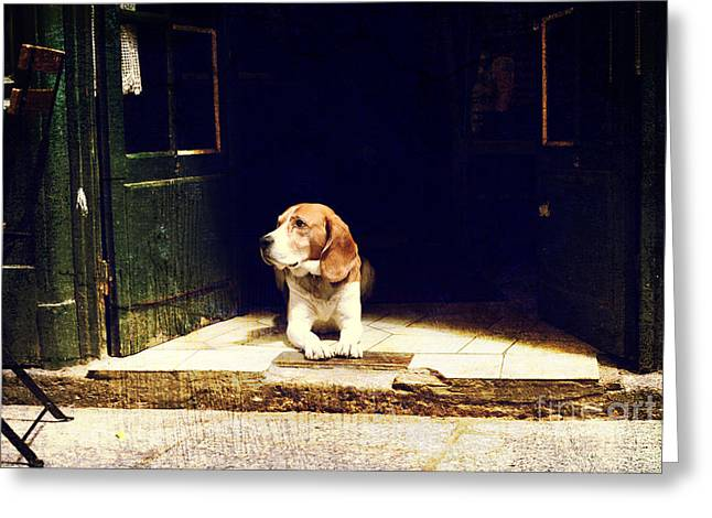 Dog Guarding The Entrance To The House Greeting Card