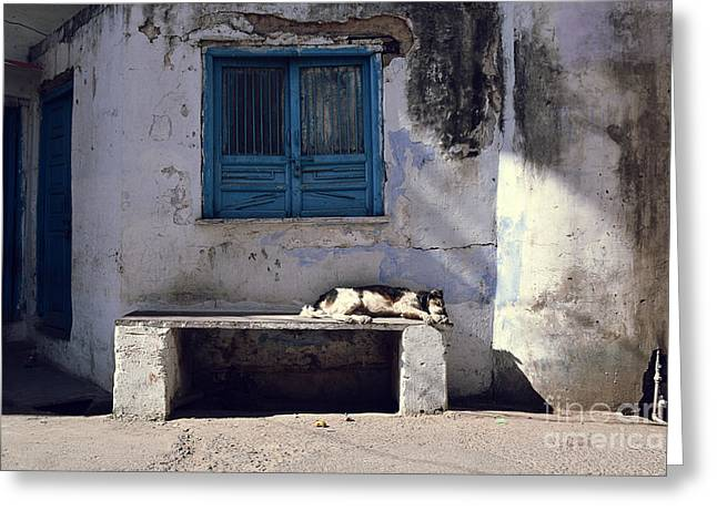 Dog Sleeps On A Bench Outdoor In Greeting Card by Sergio Capuzzimati