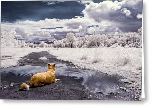 Doggy Daydream Greeting Card