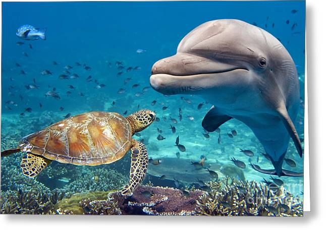 Dolphin And Turtle Underwater On Reef Greeting Card