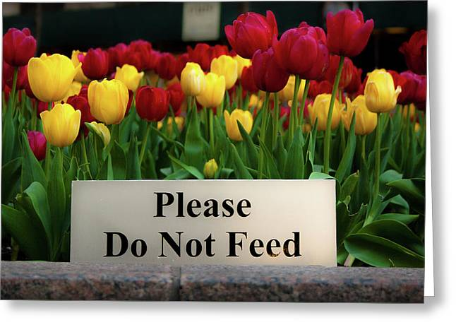 Dont Feed The Tulips Greeting Card