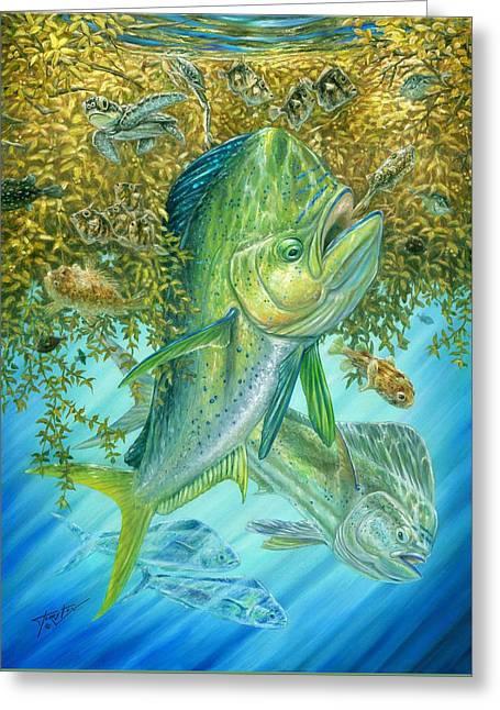 Dorados Hunting In Sargassum Greeting Card