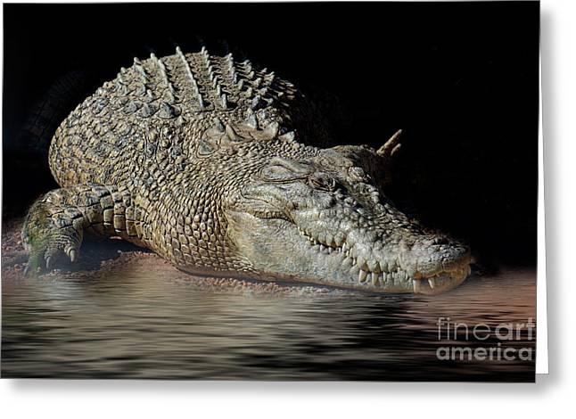 Greeting Card featuring the photograph Dozy Crocodile by Elaine Teague