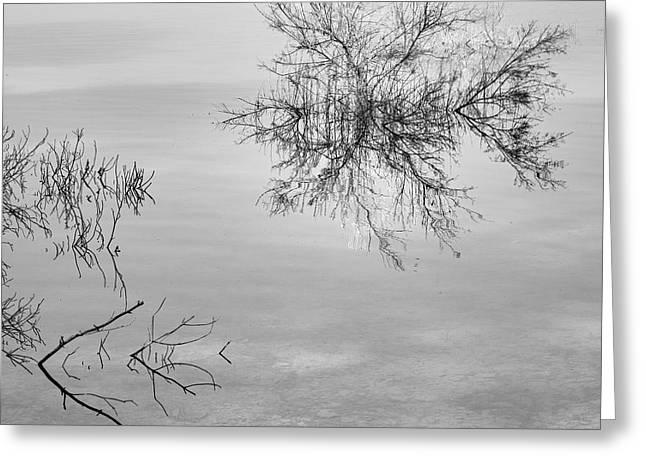 Dream Reflexes. At The Lake. Greeting Card