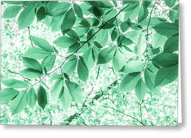 Dreaming Of Summer In Paolo Veronese Green Greeting Card