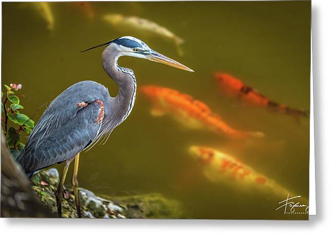 Greeting Card featuring the photograph Dreaming Tricolor Heron by Francisco Gomez